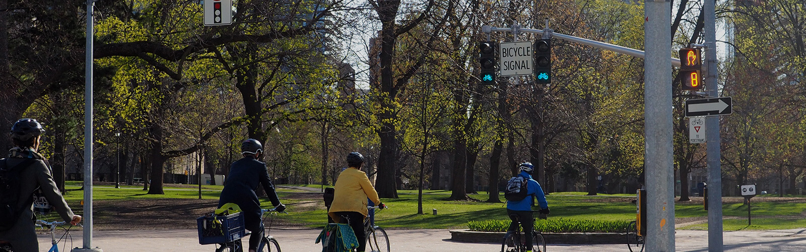 Four cyclists pedal across Queen's Park Crescent West toward Queen's Park, at a bicycle traffic light. The park ahead of them is lush and green. Highrise buildings poke through from behind the budding spring trees in the park.