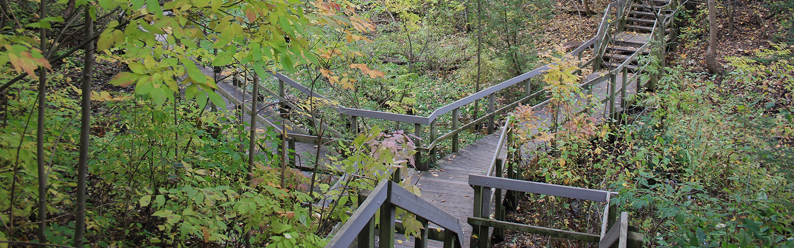 A lush ravine with wooden stairs