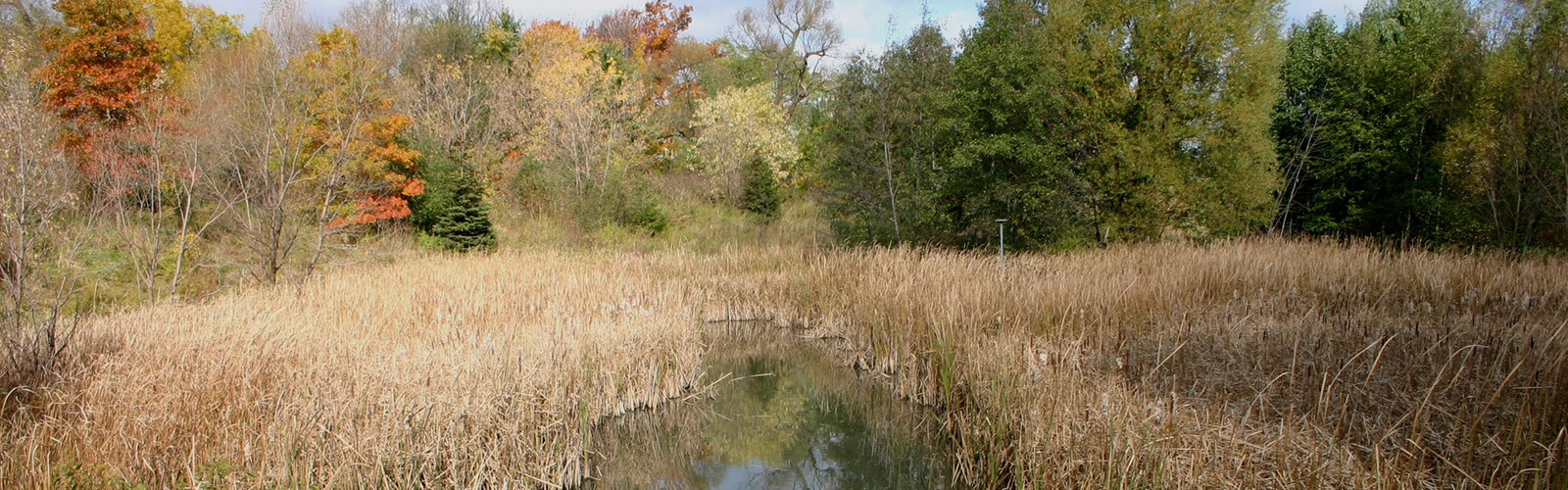 A fall scene with a swamp in the foreground lined with lush trees and greenery in the background.
